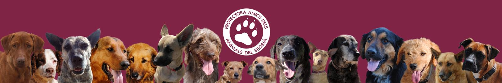 Amics dels Animals del Segrià