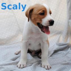 Scaly