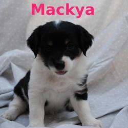 Mackya